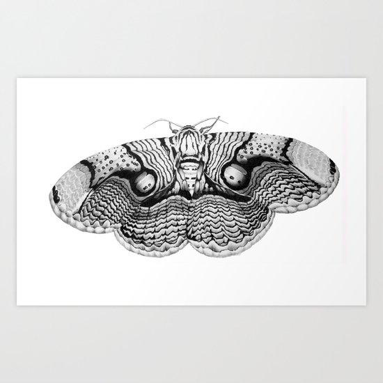 Brahmin Moth Art Print