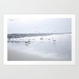 Flock of gulls Art Print