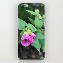 Pink-purple flower in Butchart's garden iPhone Skin