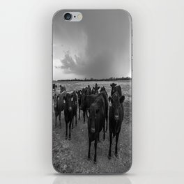 Hanging Out - Black and White Photo of Cows in Kansas iPhone Skin