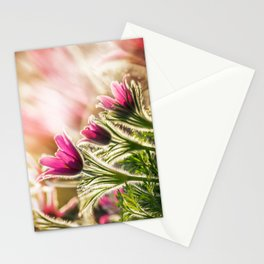Pasque Stationery Cards