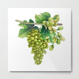 Watercolor bunches of white grapes hanging on the branch Metal Print