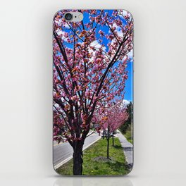 Spring on Waterman Drive, Knightville, South Portland, Maine iPhone Skin
