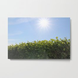 Summer Photos, Nature Photography, fine art gifts, Landscape Photo, sunshine photo Metal Print