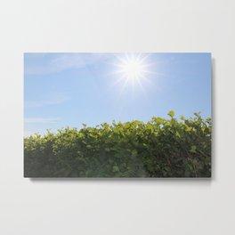 Summer Photos, Nature Photography, fine art gifts, Landscape Photo, sunshine photo Metal Print