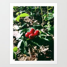 Spider Fruit Art Print