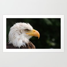 MM - Grinning bald eagle Art Print
