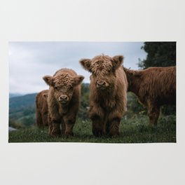 Scottish Highland Cattle Calves - Babies playing II Rug
