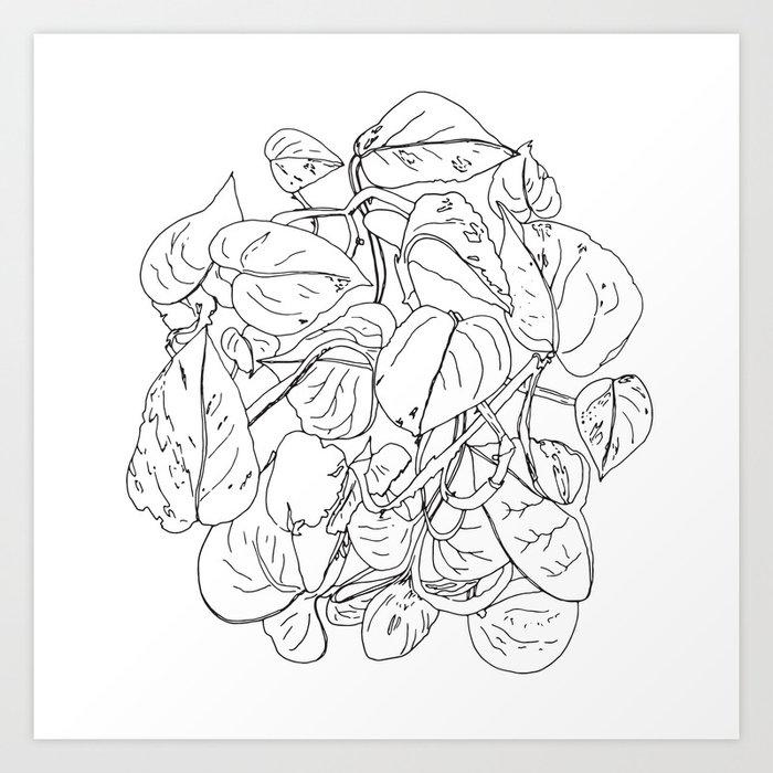 PLANT PORTRAITS - DEVIL'S IVY EPIPREMNUM AUREUM - COOPER  AND COLLEEN Art Print