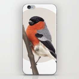 Bull Finch iPhone Skin
