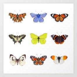 Set of Butterflies, Watercolor Butterflies, butterfly painting Art Print