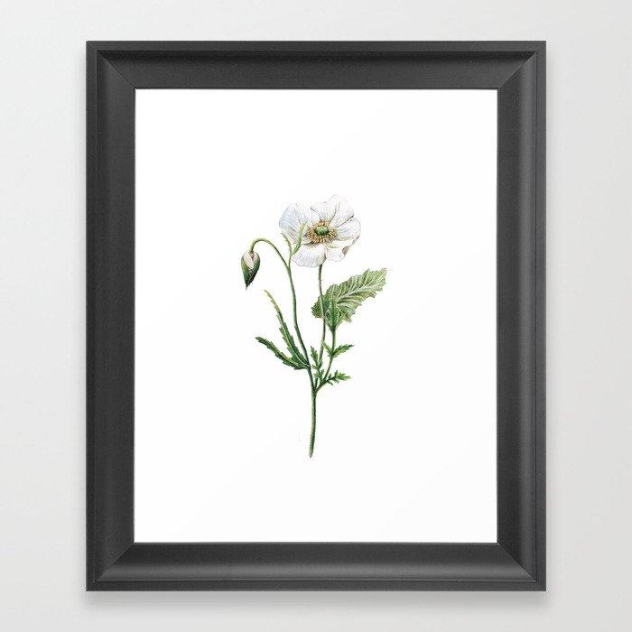 White Poppy Botanical Drawing Gerahmter Kunstdruck