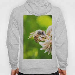 Bee Working on White Clover Flower Close Up Hoody