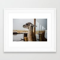 lama Framed Art Prints featuring Lama by miloezger