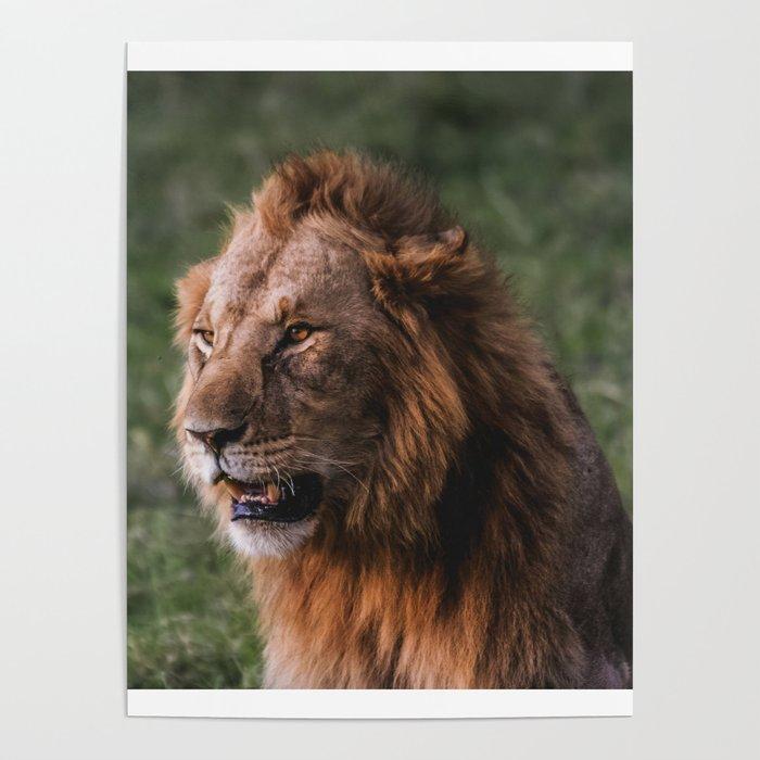 Majestic Lion Headshot Poster By Adjua