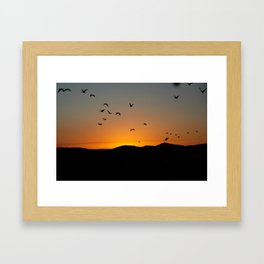 Ibis Framed Art Print