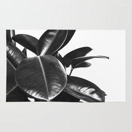 Black Ficus Elastica Rug