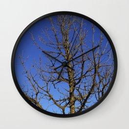 Bur Oak, Quercus macrocarpa, Wisconsin tree, prairie, savanna Wall Clock