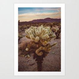 Cholla Cactus Garden VI Art Print