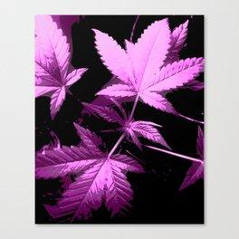 DaPlant Purple - #GreenRush Collective Canvas Print