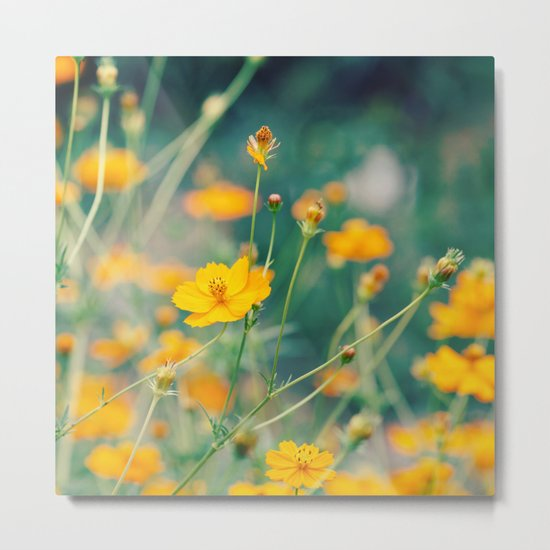 Orange Cosmos Metal Print