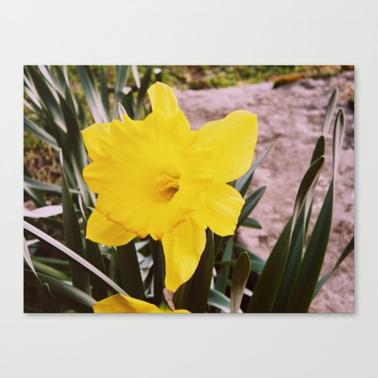 Springtime is here. Canvas Print