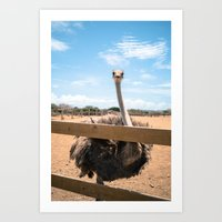 Ostrich pt 1 - All Eyes on You Art Print