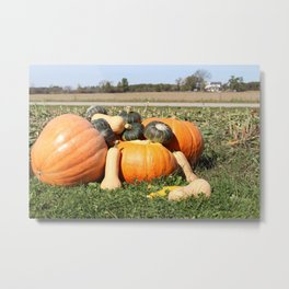 Autumn Fall Pumpkins and Gourds Metal Print