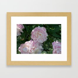 pink puffs Framed Art Print