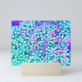 Blue and Hot Pink Succulent Sedum Flowers Detail Mini Art Print