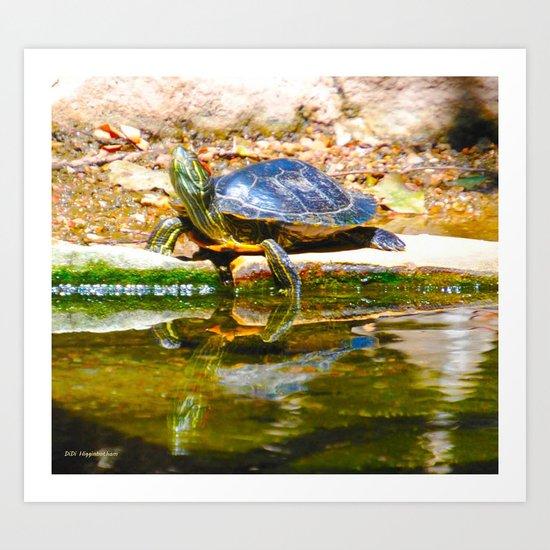 Red Ear Slider Turtle Art Print
