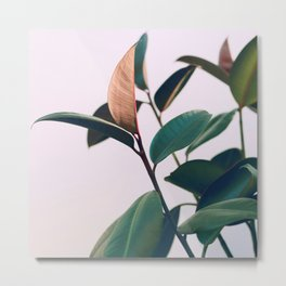 Ficus Elastica #4 Metal Print