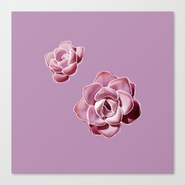 Succulent by Abi Roe Canvas Print