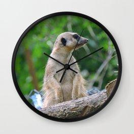 Meerkat Summers Wall Clock