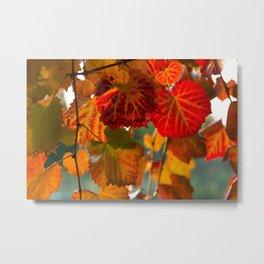 Autumn leaves 1 Metal Print