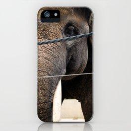 Elefante cautivo iPhone Case