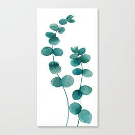 green eucalyptus watercolor Canvas Print