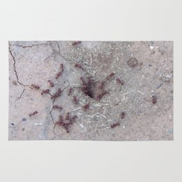 Fire Ants Rug
