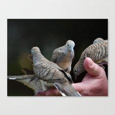 Hand holding Birds Canvas Print