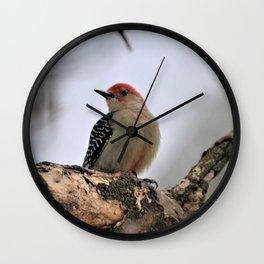 Red Bellied Woodpecker Wall Clock