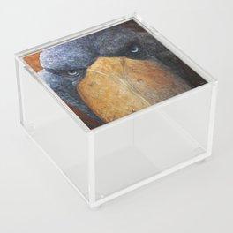 Shoebill (Balaeniceps rex) Acrylic Box