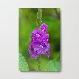 pretty purple flower Metal Print