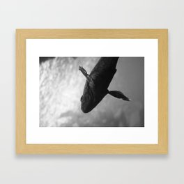 Fish 1 Framed Art Print