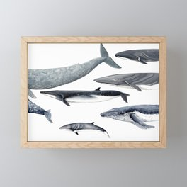 Whales Framed Mini Art Print