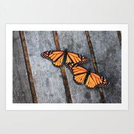 Monarchs two Art Print