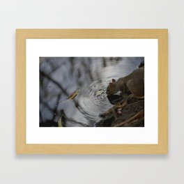 Sipping Squirrel Framed Art Print