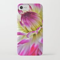 dahlia iPhone & iPod Cases featuring Dahlia by Astrid Ewing