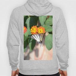 Scarce Swallowtail Butterfly Hoody