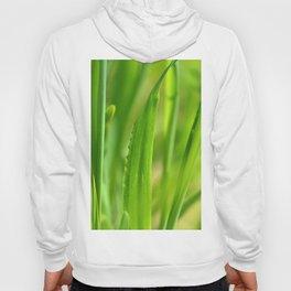 Grass 0138 Hoody