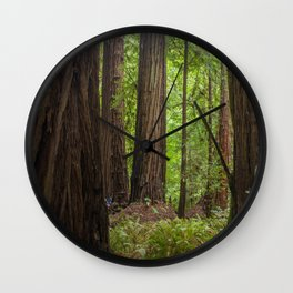 Muir Woods Trees Wall Clock